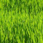 grass 1537982525