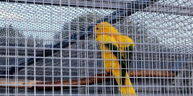 Ať mají papoušci i andulky skvělé obydlí. Postavte jim ho