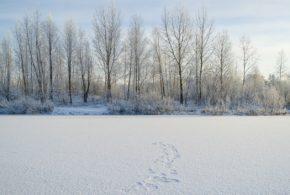 Jak to vypadá na Sibiři? Dnes je to nehostinné prostředí, to se ale může za pár let změnit